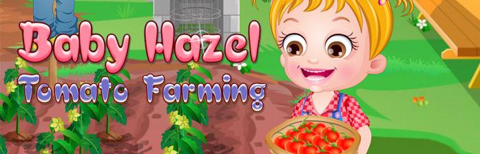 Si Kecil Hazel: Berkebun Tomat