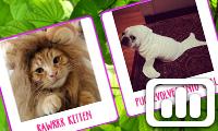 Poll: Cute Animals