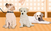 Puppies Galore Dress-Up
