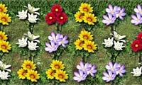 Mania per i fiori