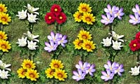 Maniak Mencocokkan Bunga