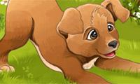 Anak Anjing Manis si Hanna