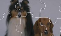 Jigsaw World: Puppies