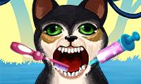 Zostań dentystą zwierząt