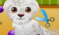 Stray Puppy Care