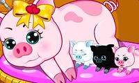 Pregnant Pig New Babies