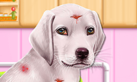 Labrador puppy-opvang