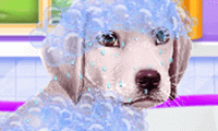 Labrador bij de dokterssalon