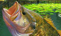 Pesca nel lago: laguna verde