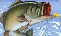 Pêche en délire
