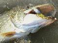 Pesca: caccia al trofeo