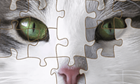 Jigsaw Puzzle: Cartoon Cats