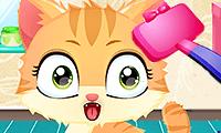 Kätzchen-Wellness